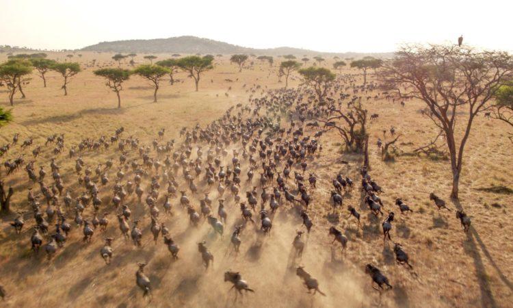 Masai Mara National Reserve | Wildebeest Migration Tours